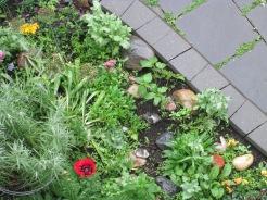 Poppy Sage Garden Courtyard